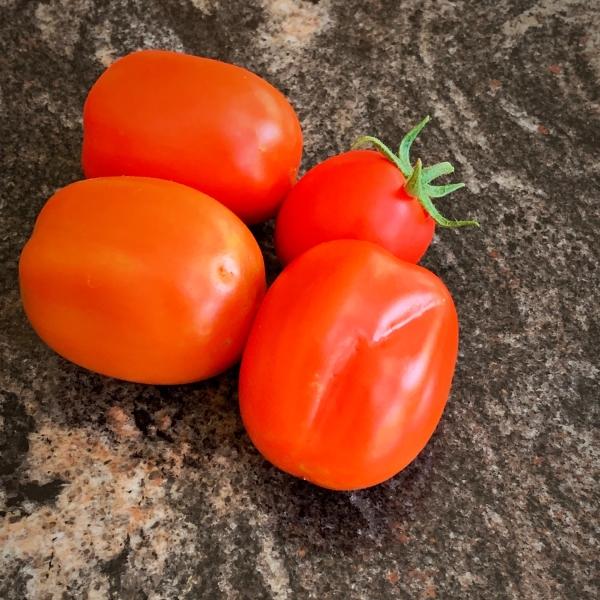 Tomatoes I garden to kitchen